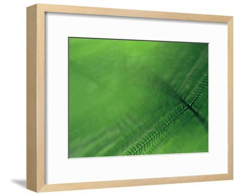 Leaf Patterns-Mattias Klum-Framed Art Print
