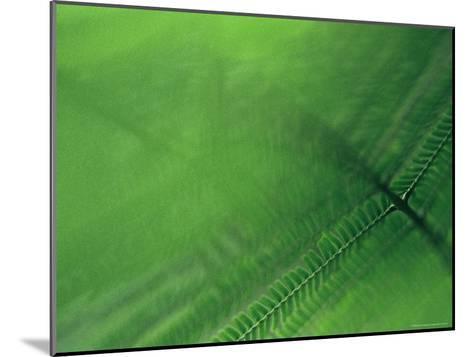 Leaf Patterns-Mattias Klum-Mounted Photographic Print