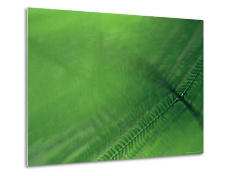 Leaf Patterns-Mattias Klum-Metal Print