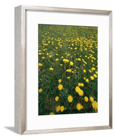 A Dandelion Filled Field in Rogers Pass-Michael S^ Lewis-Framed Art Print