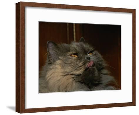 Persian Cat-Brian Gordon Green-Framed Art Print