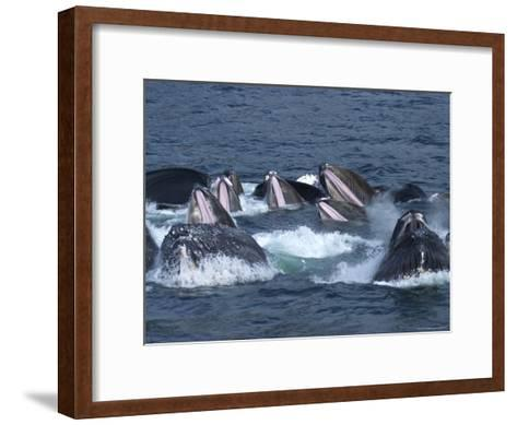 Feeding Time for Humpback Whales in the Inside Passage of Alaska-Ralph Lee Hopkins-Framed Art Print