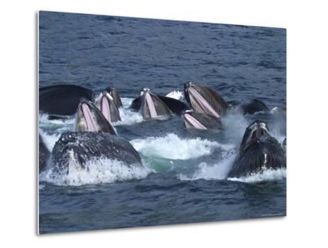 Feeding Time for Humpback Whales in the Inside Passage of Alaska-Ralph Lee Hopkins-Metal Print