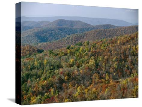 Fall Colors in Forests Along Tanners Ridge, with View of Massanutten Mountain-Raymond Gehman-Stretched Canvas Print