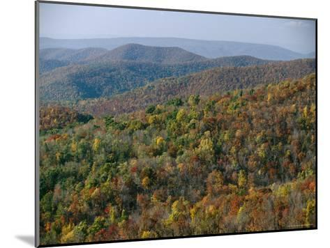 Fall Colors in Forests Along Tanners Ridge, with View of Massanutten Mountain-Raymond Gehman-Mounted Photographic Print