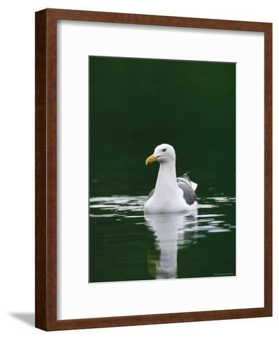 A Seagull Floating Serenely in Calm Water-Klaus Nigge-Framed Art Print