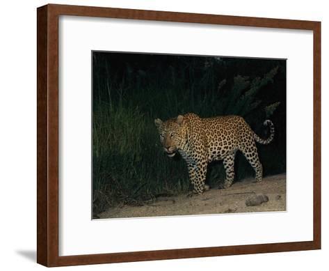 Male Leopard on Patrol at Night-Kim Wolhuter-Framed Art Print