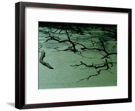 Slough Covered with Duckweed-Raymond Gehman-Framed Art Print