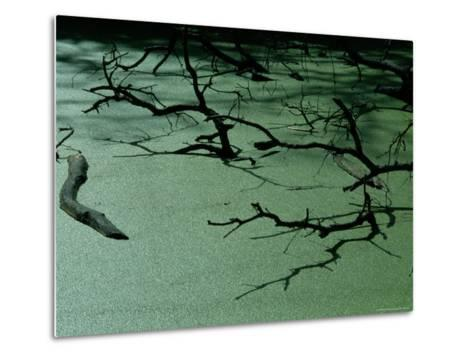 Slough Covered with Duckweed-Raymond Gehman-Metal Print