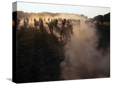 The Horses Run Home Through a Cloud of Dust-Sisse Brimberg-Stretched Canvas Print