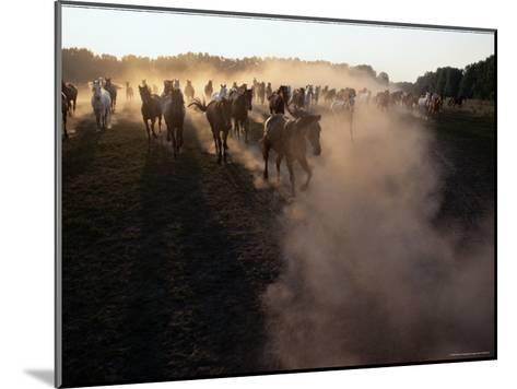 The Horses Run Home Through a Cloud of Dust-Sisse Brimberg-Mounted Photographic Print