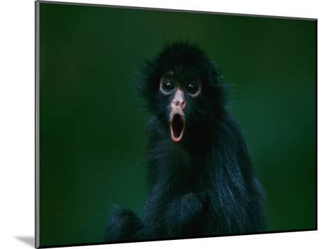 An Orphaned Black-Faced Spider Monkey Named Pulgoso-Joel Sartore-Mounted Photographic Print