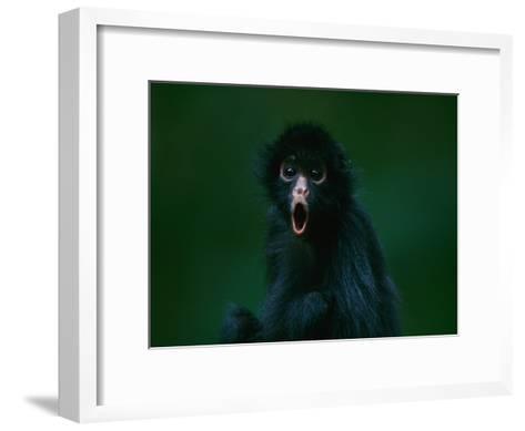 An Orphaned Black-Faced Spider Monkey Named Pulgoso-Joel Sartore-Framed Art Print