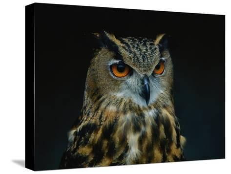 African Eagle Owl-Joel Sartore-Stretched Canvas Print