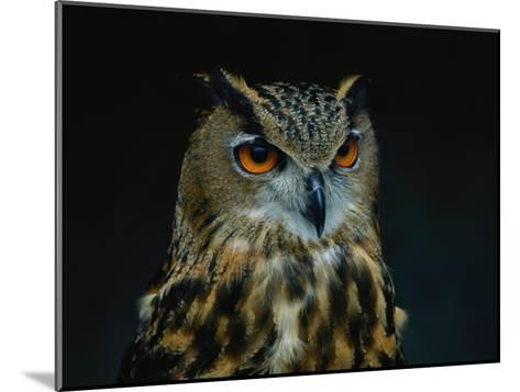 African Eagle Owl-Joel Sartore-Mounted Photographic Print