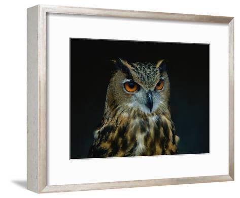 African Eagle Owl-Joel Sartore-Framed Art Print