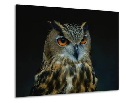 African Eagle Owl-Joel Sartore-Metal Print