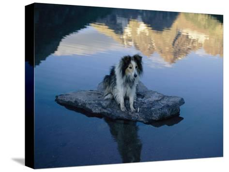 A Dog Perches Upon a Rock in the Middle of a Glassy Lake-Joel Sartore-Stretched Canvas Print