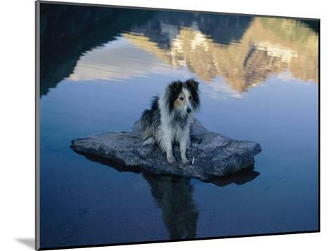A Dog Perches Upon a Rock in the Middle of a Glassy Lake-Joel Sartore-Mounted Photographic Print