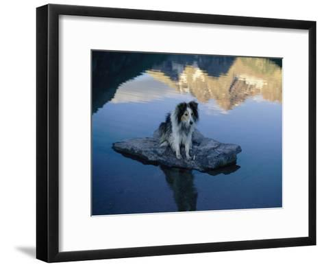 A Dog Perches Upon a Rock in the Middle of a Glassy Lake-Joel Sartore-Framed Art Print