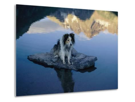 A Dog Perches Upon a Rock in the Middle of a Glassy Lake-Joel Sartore-Metal Print
