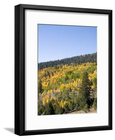 A Forest Changes Color in Autumn as the Aspen Trees Turn Golden-Taylor S^ Kennedy-Framed Art Print
