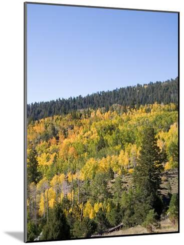 A Forest Changes Color in Autumn as the Aspen Trees Turn Golden-Taylor S^ Kennedy-Mounted Photographic Print