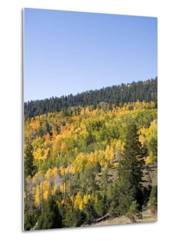 A Forest Changes Color in Autumn as the Aspen Trees Turn Golden-Taylor S^ Kennedy-Metal Print
