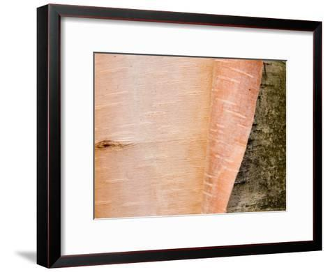 A Close View of Peeling Birch Bark on a Tree-Taylor S^ Kennedy-Framed Art Print