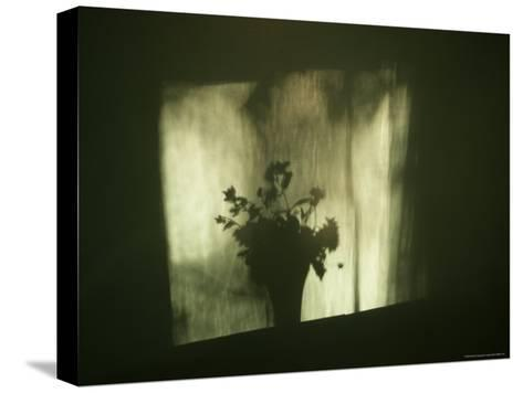A Shadow of a Vase of Flowers Falls on a Wall-Stephen Alvarez-Stretched Canvas Print