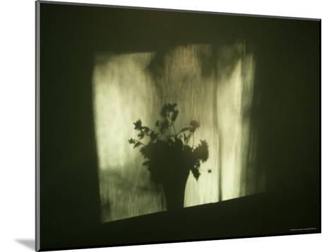 A Shadow of a Vase of Flowers Falls on a Wall-Stephen Alvarez-Mounted Photographic Print