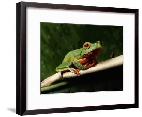 Dainty Green Tree Frog--Framed Art Print