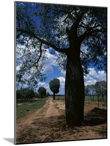 Baobab Trees Along the Dog Fence, Queensland, Australia--Mounted Photographic Print