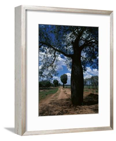 Baobab Trees Along the Dog Fence, Queensland, Australia--Framed Art Print