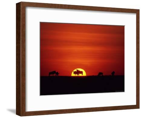 Wildebeests are Silhouetted against the Sun-Medford Taylor-Framed Art Print