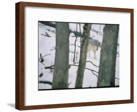 Wolf-Michael Nichols-Framed Art Print