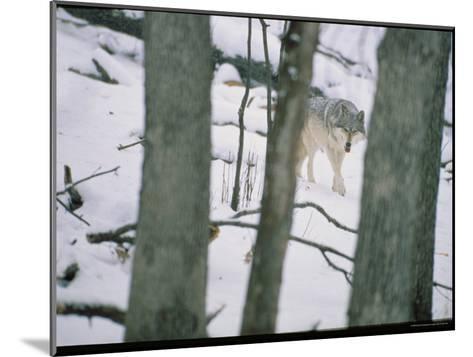 Wolf-Michael Nichols-Mounted Photographic Print