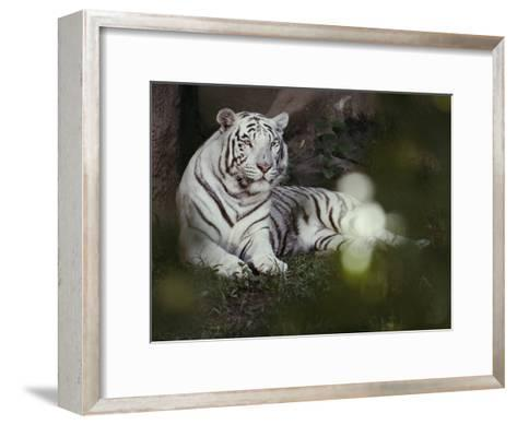 A Rare White Tiger at the Cincinnati Zoo-Michael Nichols-Framed Art Print