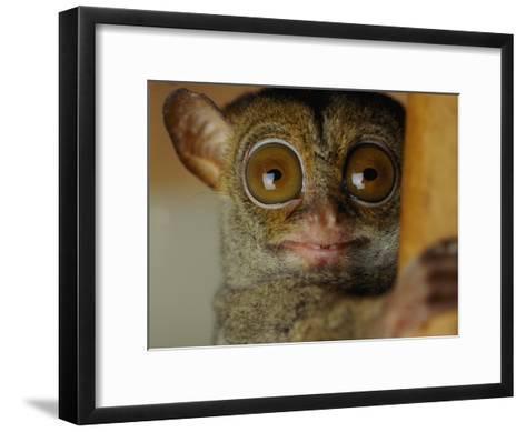 Tarsier-Michael Nichols-Framed Art Print