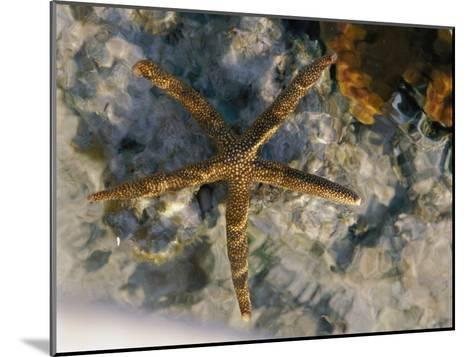 A Starfish in a Tide Pool on Australias Great Barrier Reef-Nicole Duplaix-Mounted Photographic Print