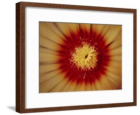 Close View of a Biznaga De Pina Cactus Flower-George F^ Mobley-Framed Art Print