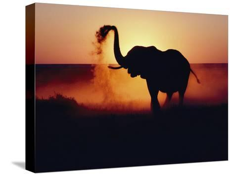 An Elephant Tosses Dust to Coat its Hide for Protection against the African Sun-Annie Griffiths-Stretched Canvas Print
