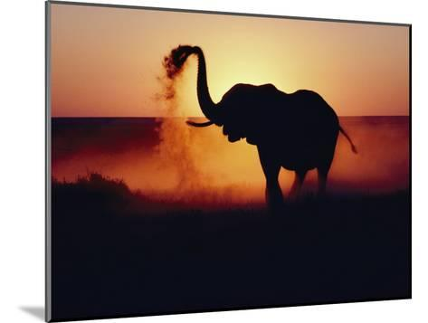 An Elephant Tosses Dust to Coat its Hide for Protection against the African Sun-Annie Griffiths-Mounted Photographic Print