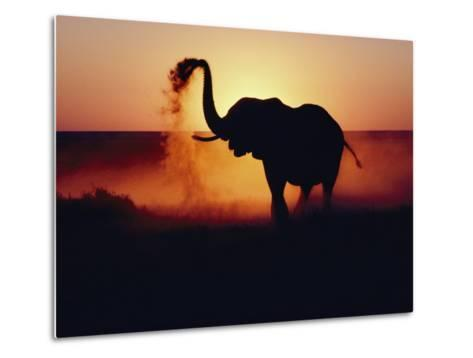 An Elephant Tosses Dust to Coat its Hide for Protection against the African Sun-Annie Griffiths-Metal Print