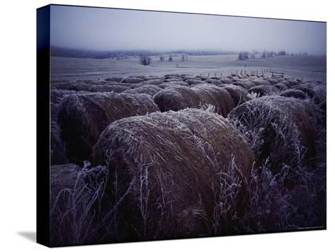 Bales of Hay Covered with Morning Frost-Kenneth Garrett-Stretched Canvas Print