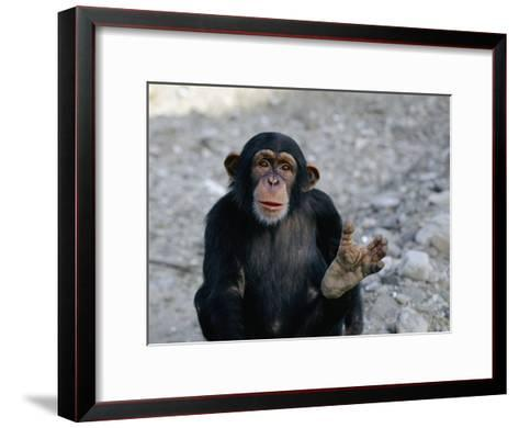 Chimpanzee Showing His Foot-Kenneth Garrett-Framed Art Print