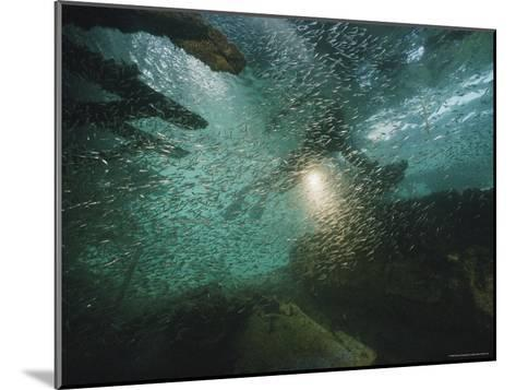 A School of Fish in an Old Wreck-Bill Curtsinger-Mounted Photographic Print