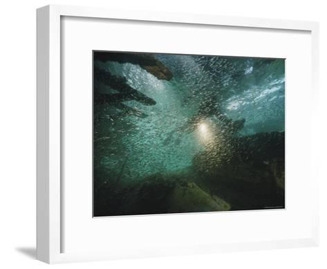 A School of Fish in an Old Wreck-Bill Curtsinger-Framed Art Print