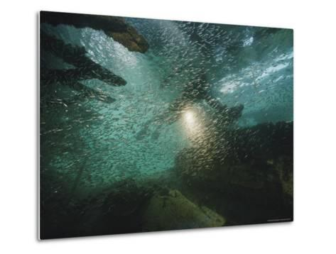 A School of Fish in an Old Wreck-Bill Curtsinger-Metal Print