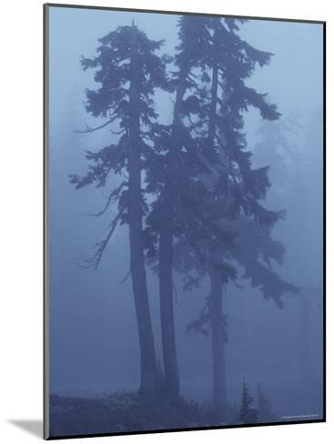 Trees in the Fog-David Boyer-Mounted Photographic Print